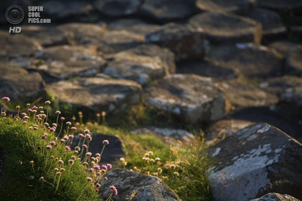 Северная Ирландия. Дорога гигантов. (tibanjax)