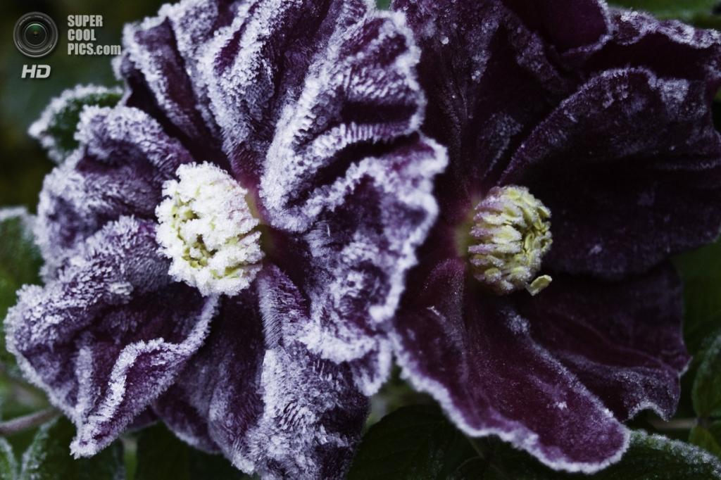 Осенние заморозки robin wilson