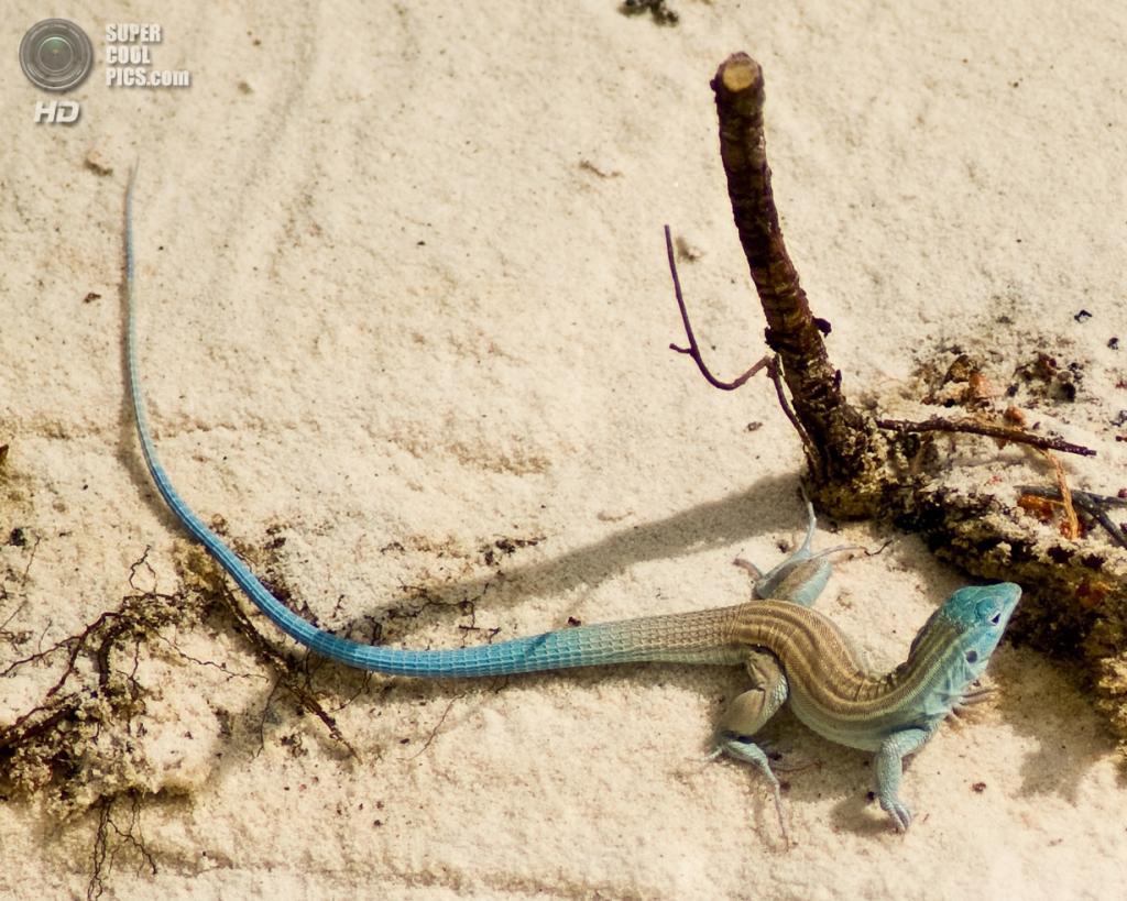 США. Нью-Мексико. Государственный заповедник Белые пески. (Frank Carey)