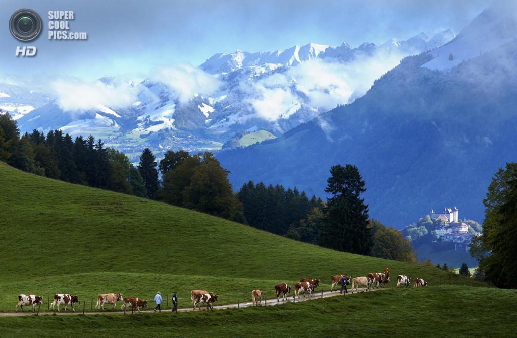 Швейцария. Грюйер. Фермеры со скотом спускаются с гор по окончании сезона выпаса. (Reuters/Denis Balibouse)