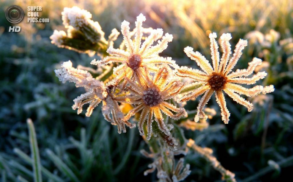 Осенние заморозки. (St Clements)
