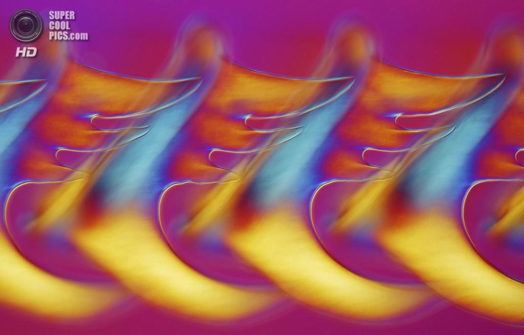 Похвальный отзыв. Радула (тёрка) обыкновенного букцинума, 200x увеличение. (Dr. David Maitland)