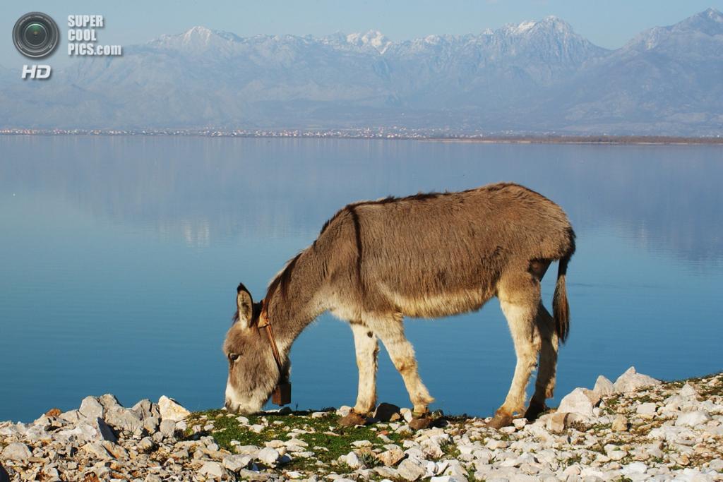 Черногория. Скадарское озеро. (Mark Orfila)