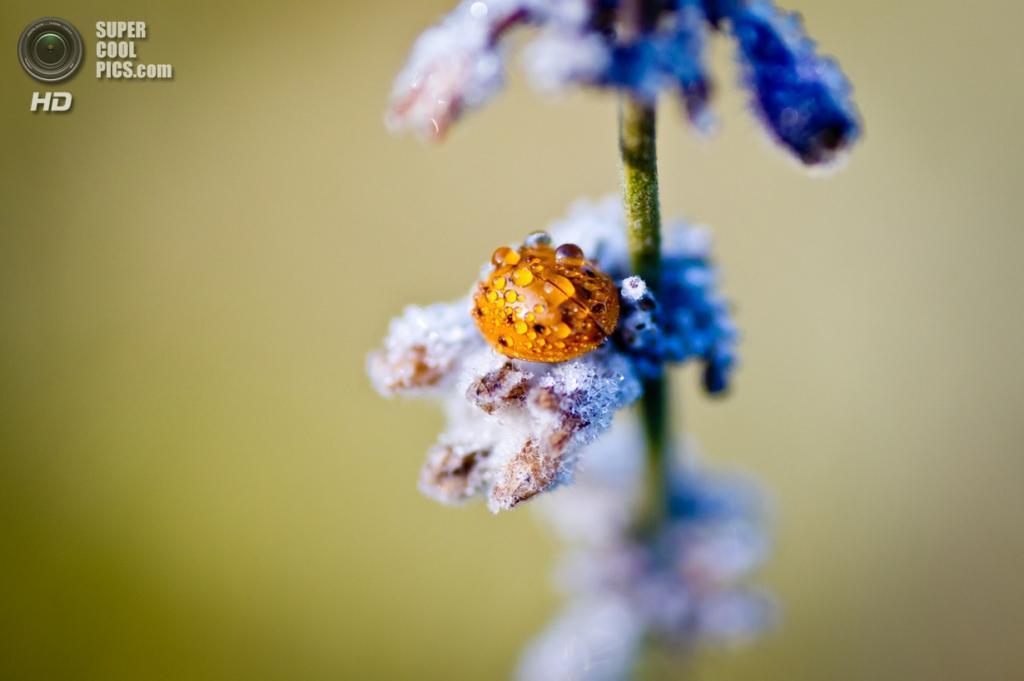 Осенние заморозки. (Paul Vladuchick)