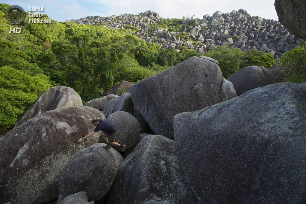 Австралия. Кейп-Мелвилл, Квинсленд. Экспедиция учёных Гарвардского университета, Университета Джеймса Кука и Национального географического общества. (Tim Laman/National Geographic)