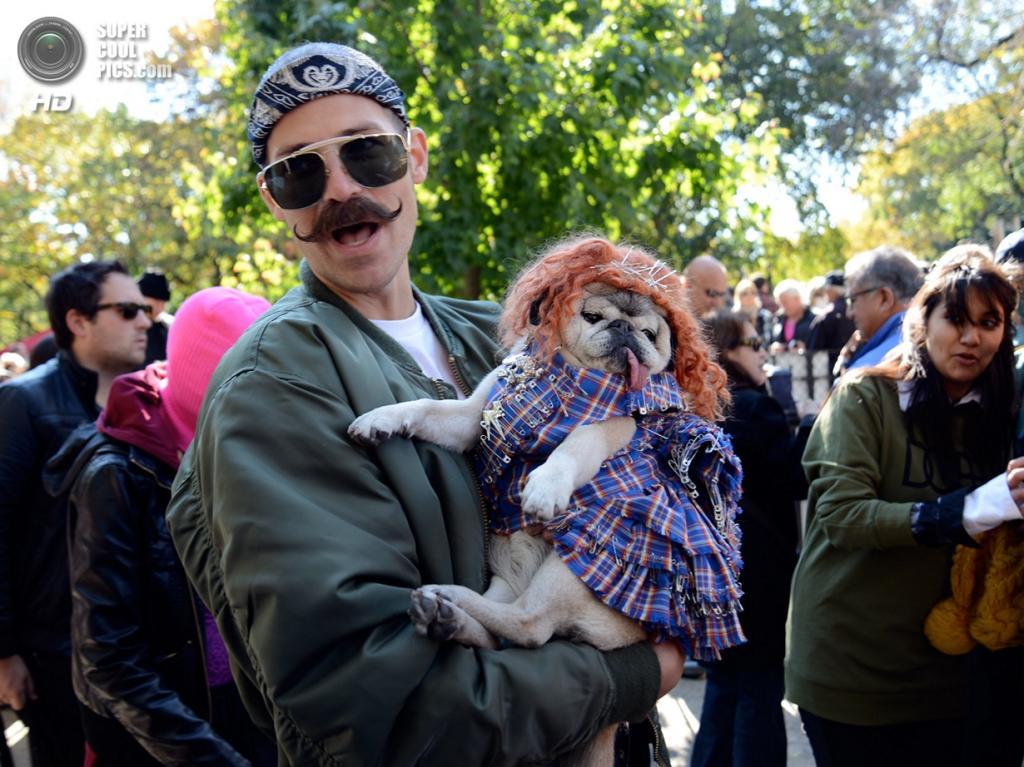 США. Нью-Йорк. 26 октября. Во время хэллоуинского парада собак на Томпкинс-сквер. (mysuspira)
