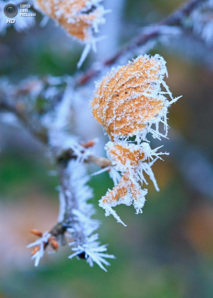 Осенние заморозки. (Raoul Pop)