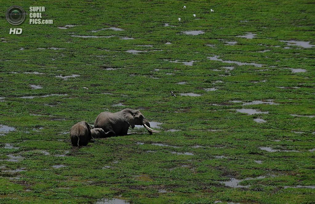 Кения. Лоитокиток, Рифт-Валли. 8 октября. Во время подсчета слонов и других крупных млекопитающих в национальном парке Амбосели. (TONY KARUMBA/AFP/Getty Images)