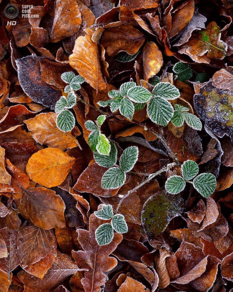 Осенние заморозки. (Joe Wright)