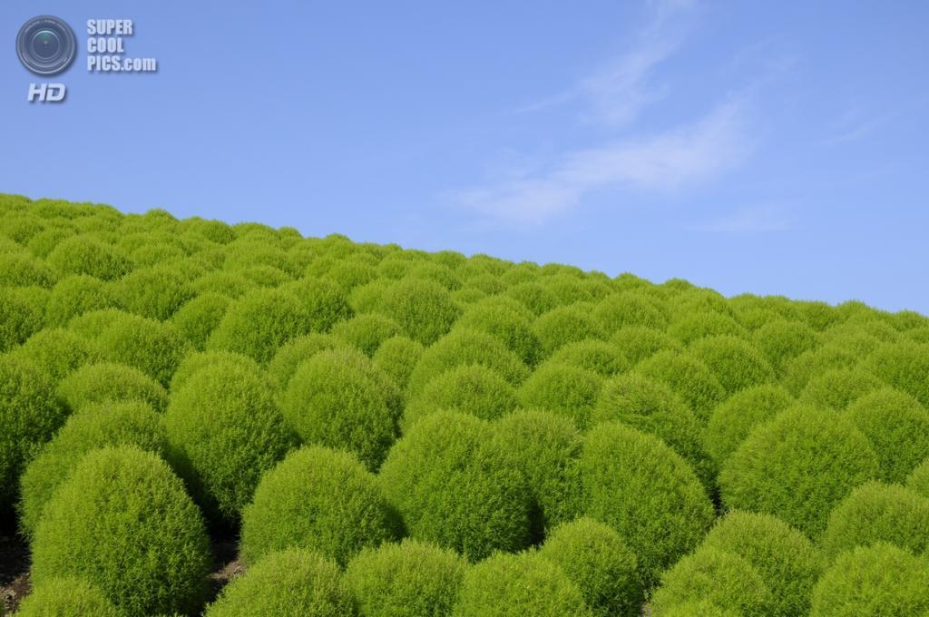 Япония хитатинака ибараки парк