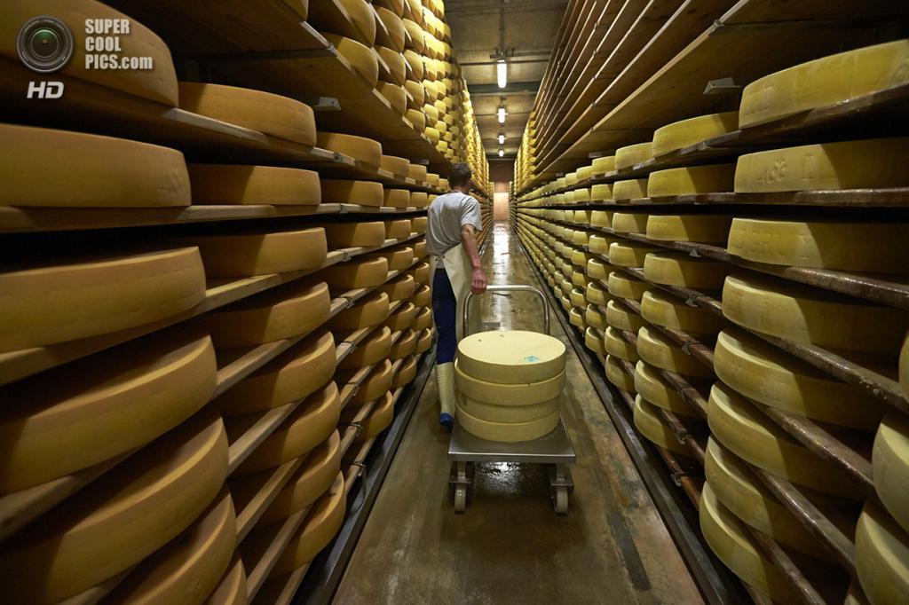 Швейцария. Грюйер. Головки сыра в погребе для созревания. (Reuters/Denis Balibouse)