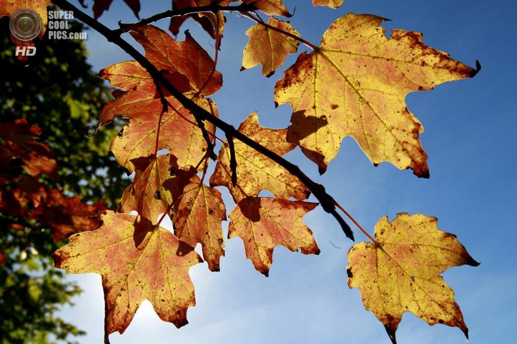 США. Берлин, Вермонт. 20 сентября. Солнце просачивается сквозь пожелтевшую листву. (AP Photo/Toby Talbot)