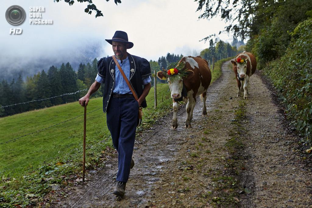 Швейцария. Грюйер. Фермер со скотом спускаются с гор по окончании сезона выпаса. (Reuters/Denis Balibouse)