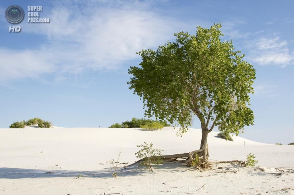 США. Нью-Мексико. Государственный заповедник Белые пески. (amorimur)