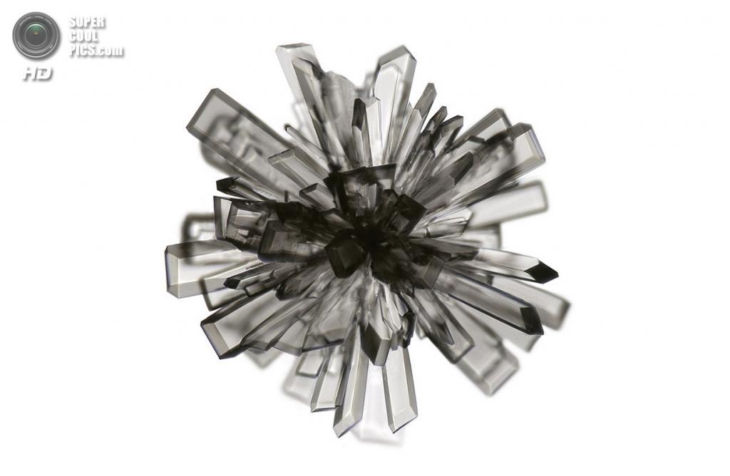 Кристалл аскорбиновой кислоты (витамина C), 100x увеличение. (Raul M. Gonzalez)