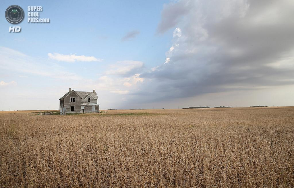 США. Салем, Северная Дакота. 2 октября. Штормовые тучи над бобовым полем. (Scott Olson/Getty Images)