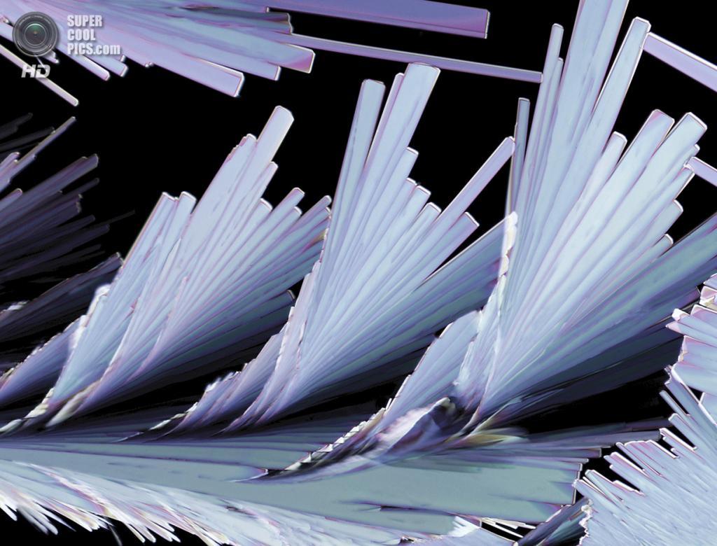Похвальный отзыв. Кристальное образование сульфосалициловой кислоты, 200x увеличение. (Thomas Balla)