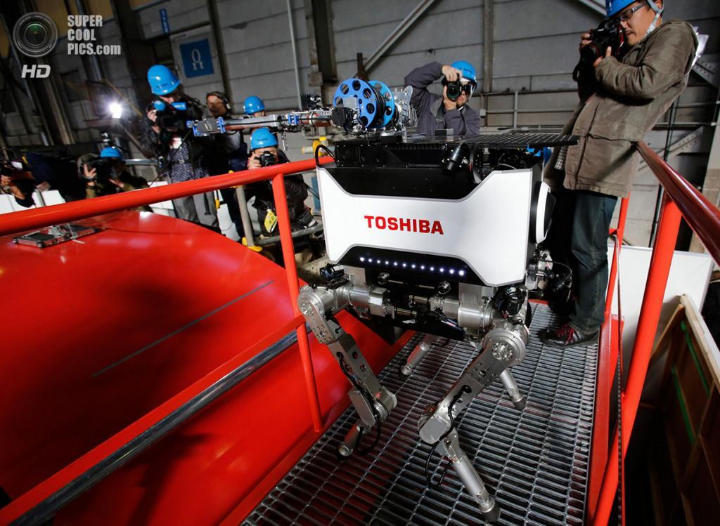 Япония. Йокогама, Канагава. 21 ноября 2012 года. Фотосессия нового четырёхногого робота Toshiba, способного перемещаться, преодолевать препятствия, подниматься по лестницам и проводить следственные и восстановительные работы в таких местах, как АЭС Фукусима-1. (REUTERS/Yuriko Nakao)