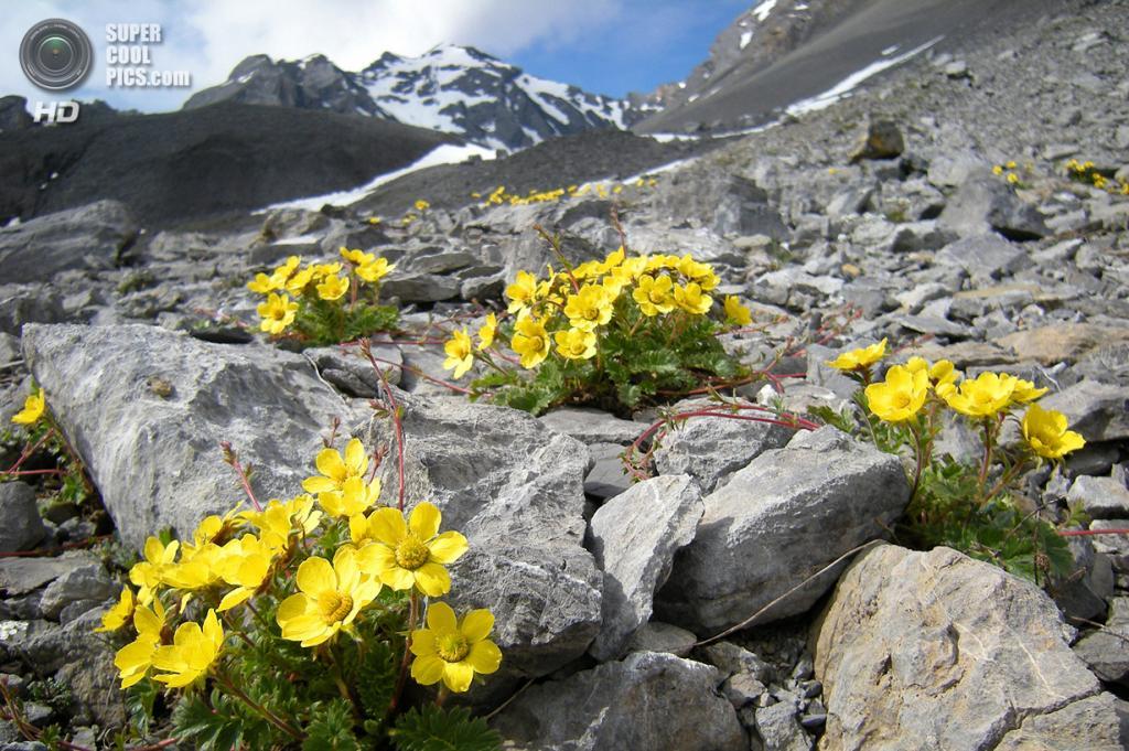 Швейцарский национальный парк. (Alpine Light & Structure)