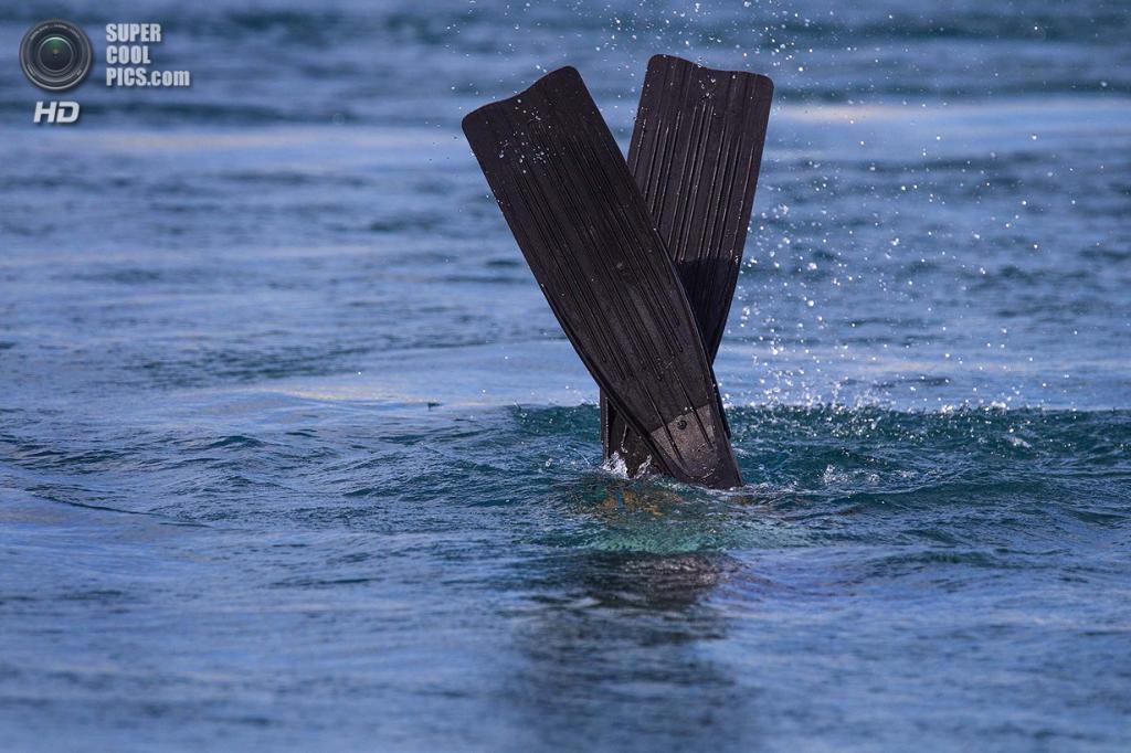 США. Форт-Пирс, Флорида. Биолог Дэйв Кларк ищет черепах во впускном канале. (Greg Lovett/The Palm Beach Post)
