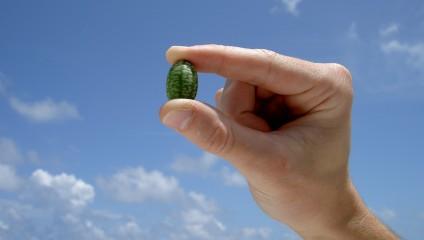 Микро-арбузы (4 фото)