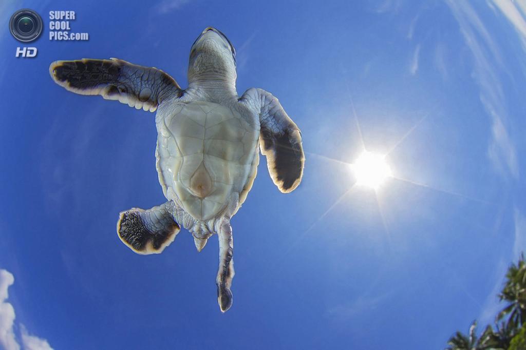 «Небесный пловец». Место съемки: Французская Полинезия. Тикехау, Туамоту. (Vincent Truchet/National Geographic Photo Contest)