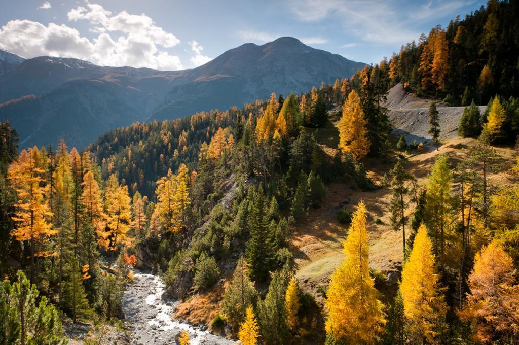 Швейцарский национальный парк (15 фото)