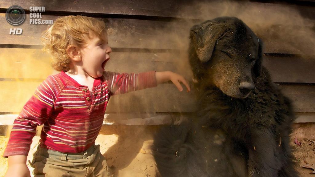«Мальчик и его собака». Место съемки: США. Брайсон-Сити, Северная Каролина. (Christopher Port/National Geographic Photo Contest)