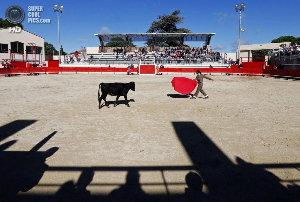 Франция. Ним, Гар. 5 октября. Ниньо в схватке с быком. (REUTERS/Jean-Paul Pelissier)