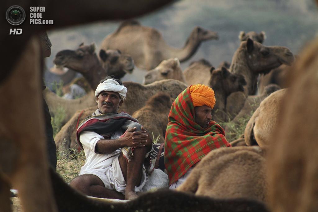 Индия. Пушкар, Раджастхан. 6 ноября. На ярмарке верблюдов. (AP Photo/Deepak Sharma)