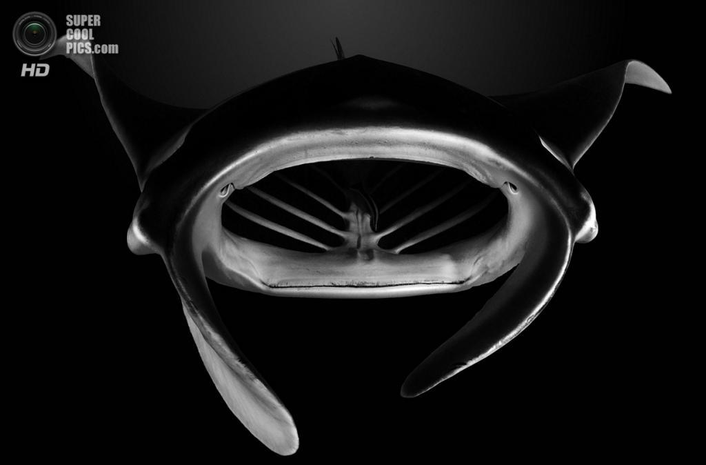 «Скат-арт». Место съемки: Французская Полинезия. Тикехау, Туамоту. (Vincent Truchet/National Geographic Photo Contest)