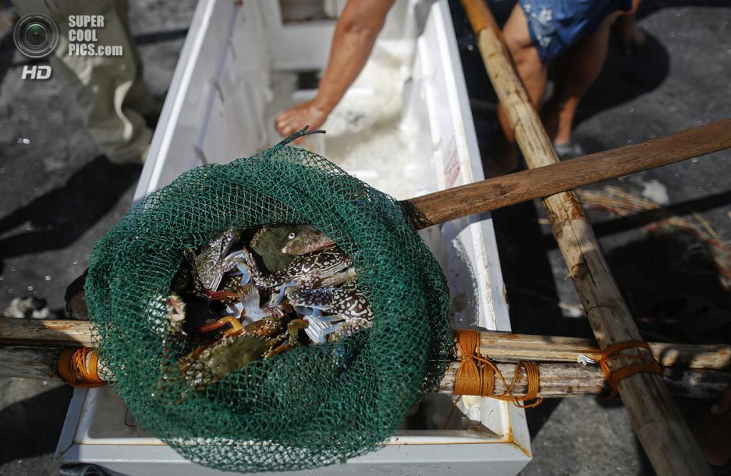 Филиппины. Танауан, Лейте. 20 ноября. Сеть с уловом. (REUTERS/Damir Sagolj)