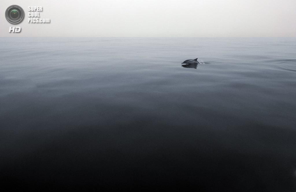 «Хранитель». Место съемки: США. Острова Чаннел, Калифорния. (Robin Benson/National Geographic Photo Contest)