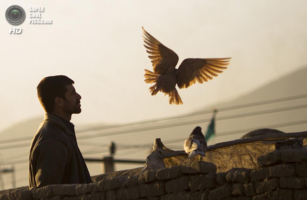 Афганистан. Кабул. 8 марта 2012 года. Афганец кормит голубей. (AP Photo/Anja Niedringhaus)