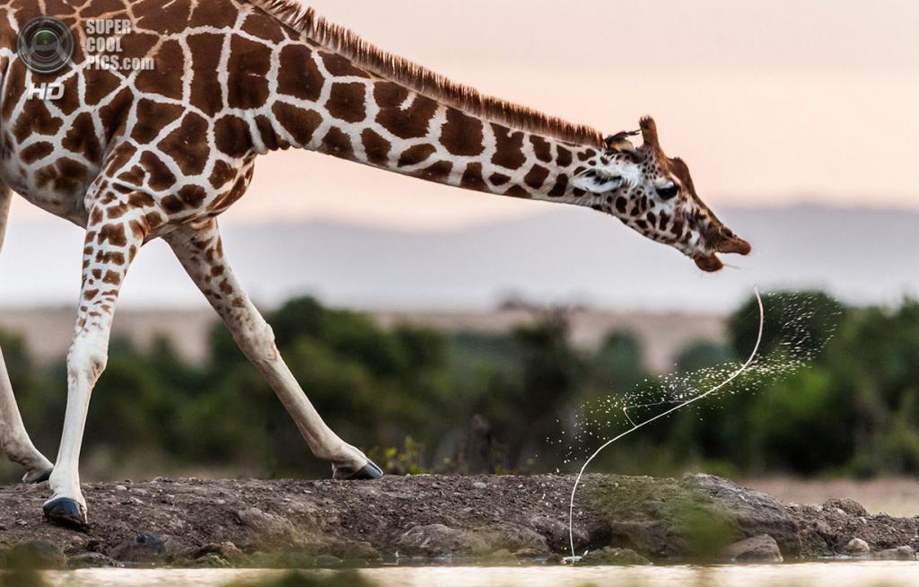 «Мара». Место съемки: Кения. Масаи-Мара. (Majed al Zaabi/National Geographic Photo Contest)