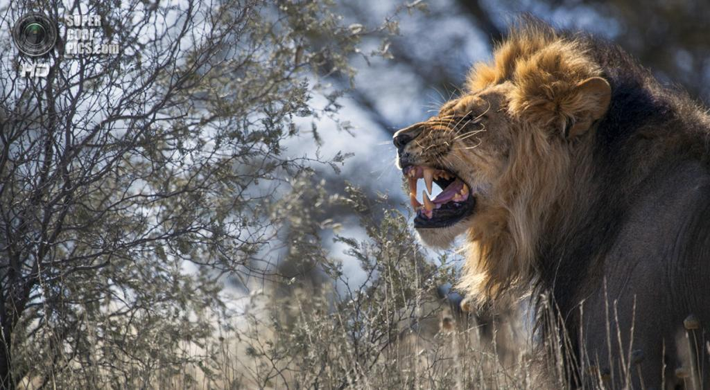 «Напрашиваетесь на неприятности?». Место съемки: ЮАР, Калахари—Гемсбок. (Chris Habegger/National Geographic Photo Contest)