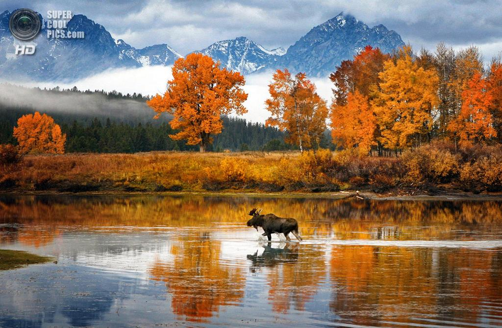 «Осенний лось». Место съемки: США. Снейк, Вайоминг. (Glen Hush/National Geographic Photo Contest)