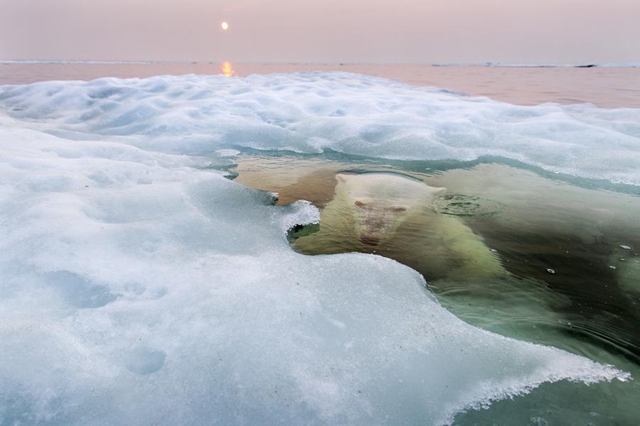 Лучшие снимки фотоконкурса National Geographic 2013 (13 фото)