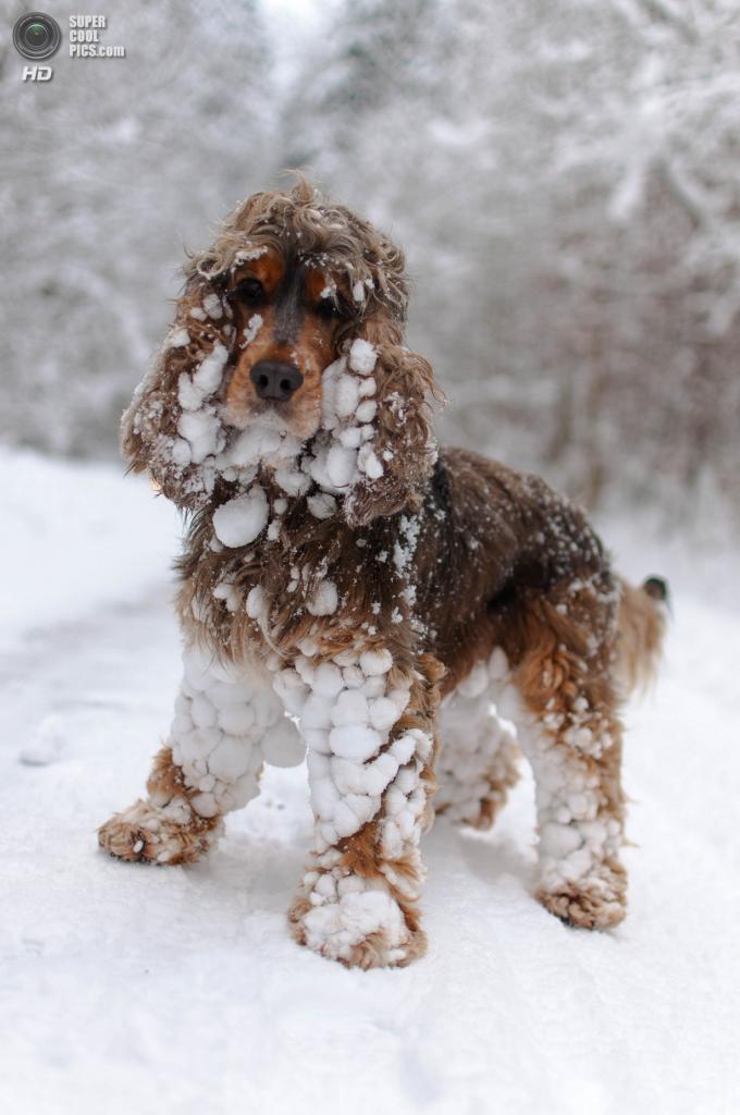 Снег — собачье счастье. (Mark_Tapley)