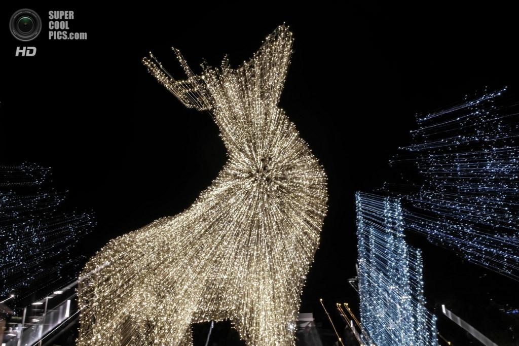 Рождественские огни. (Gábor Mester)