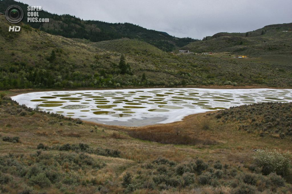 Канада. Британская Колумбия. Пятнистое озеро. (Calypso Orchid)
