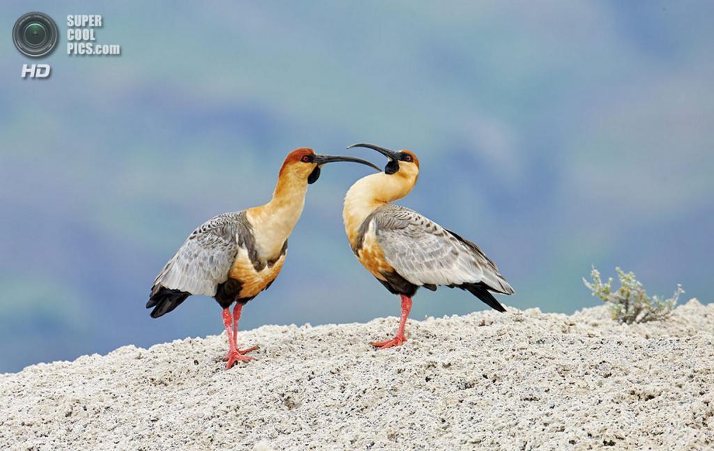 Чили. Национальный парк Торрес-дель-Пайне. (Ignacio Yúfera)