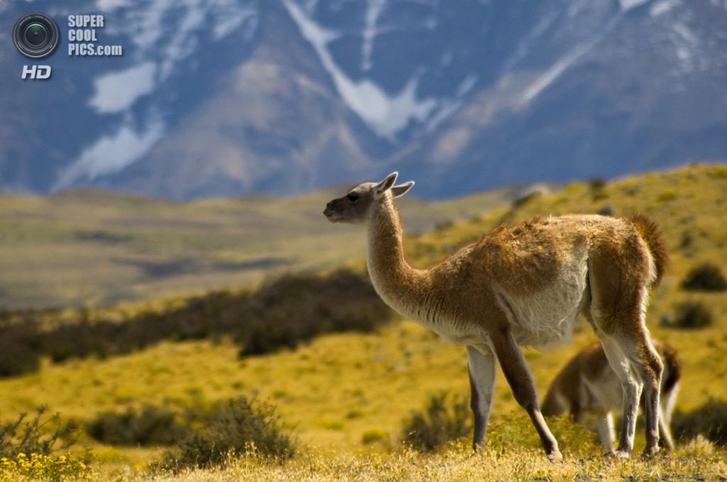 Чили. Национальный парк Торрес-дель-Пайне. (Priscila de Cassia)