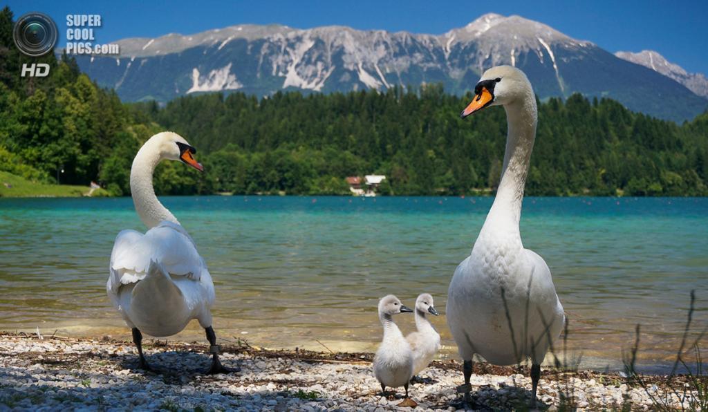 Словения. Крайна. Бледское озеро. (Pierre-Olivier Fortin)