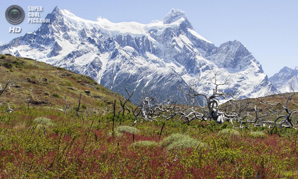 Чили. Национальный парк Торрес-дель-Пайне. (Alan du Heaume)