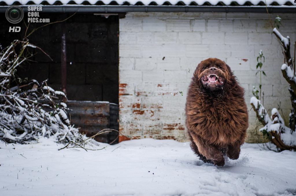 Снег — собачье счастье. (DELMER Christophe)