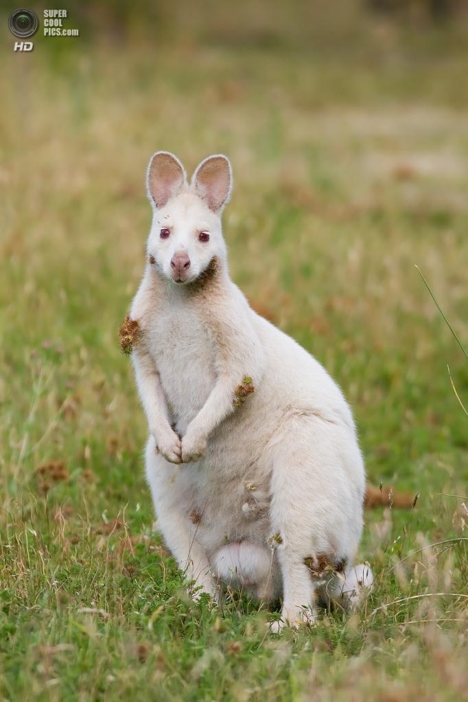 Животные-альбиносы. (JJ Harrison)