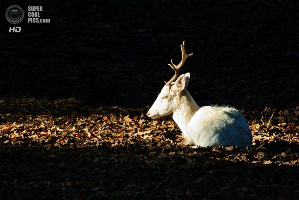 Животные-альбиносы. (Alex Murison)