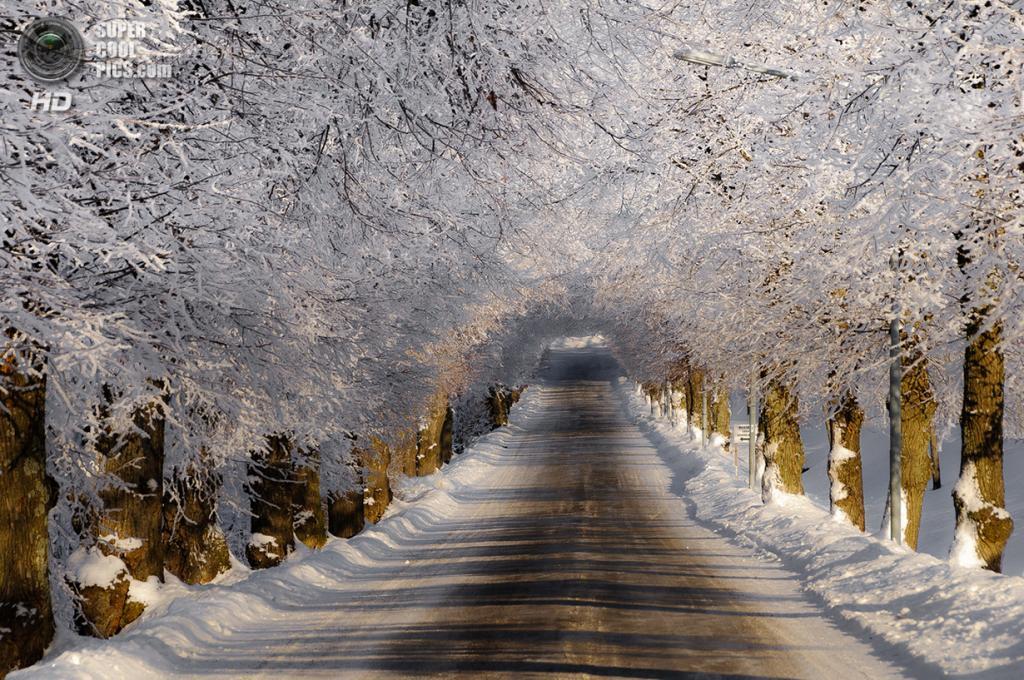 Зимний пейзаж. (Hector Melo A.)