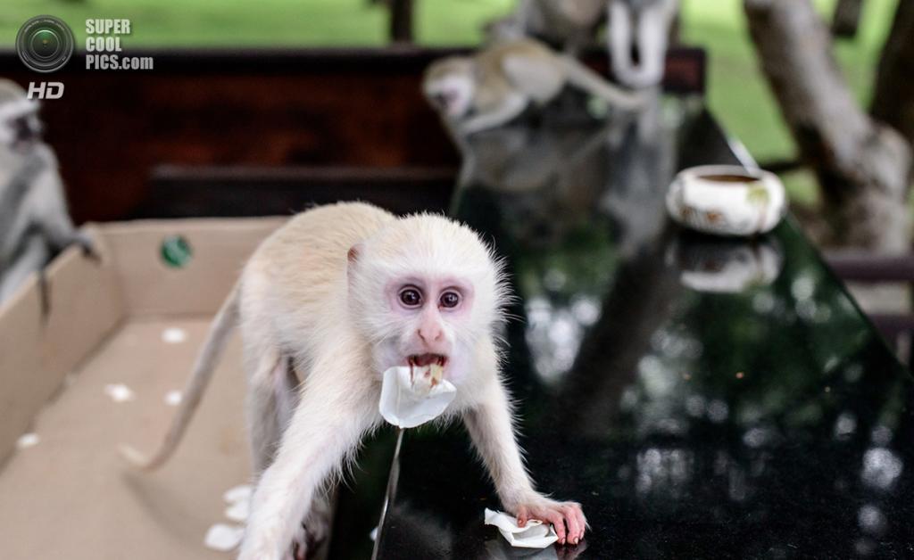 Животные-альбиносы. (Peter Dolkens)